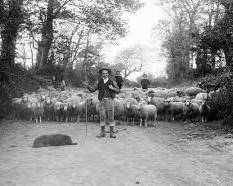 leggenda pastore Scoppolato di Pedona